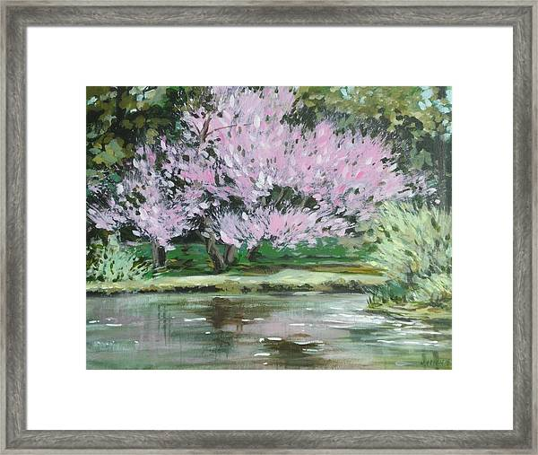 Redbud Reflections Framed Print