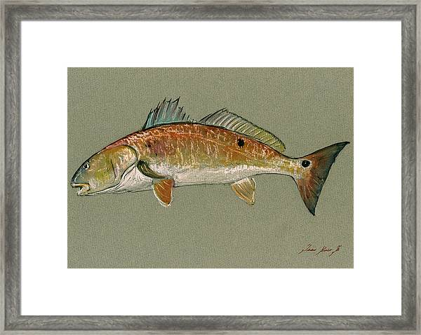 Redfish Watercolor Painting Framed Print