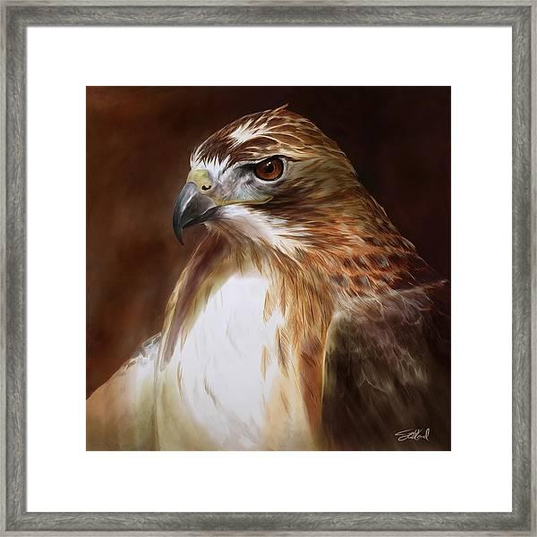 Redtailed Hawk Portrait Framed Print