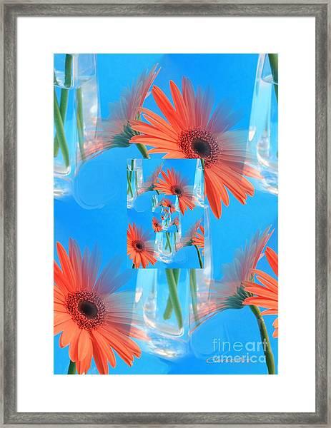 Redundant Gerbera Daisy Framed Print