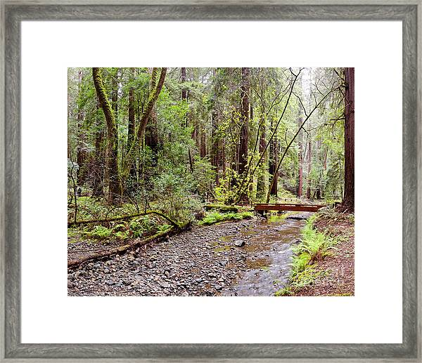 Redwood Creek Flowing Through Muir Woods National Monument - Mill Valley Marin County California Framed Print