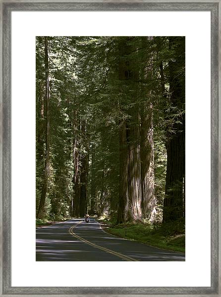 Redwood Highway Framed Print