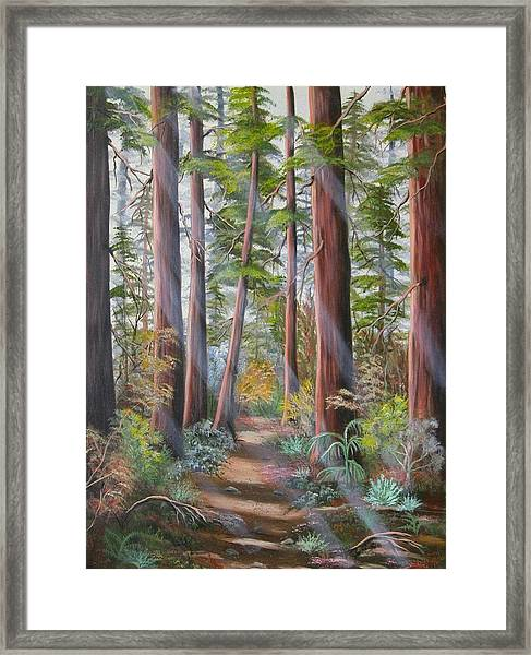 Redwood Path Framed Print
