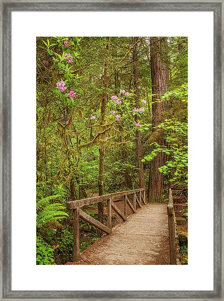 Redwood Trail  In The Spring Framed Print by Andrew Soundarajan