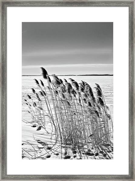 Reeds On A Frozen Lake Framed Print
