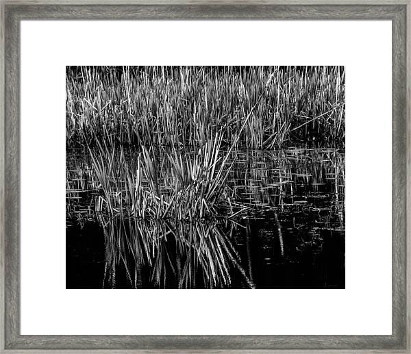 Reeds Reflection  Framed Print