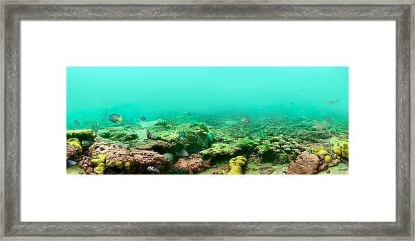 Reef Life Framed Print by Owen Caddy