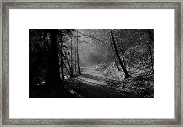 Reelig Forest Walk Framed Print