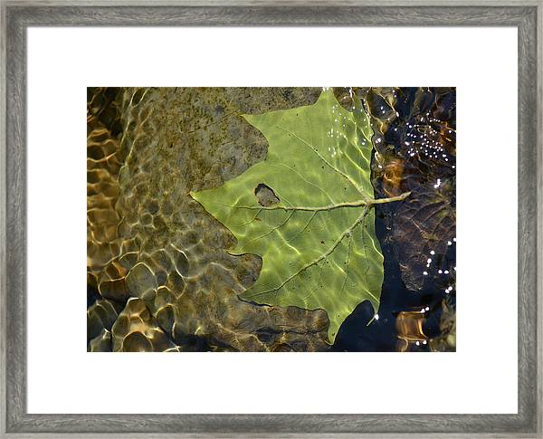 Reflected Indignation Framed Print