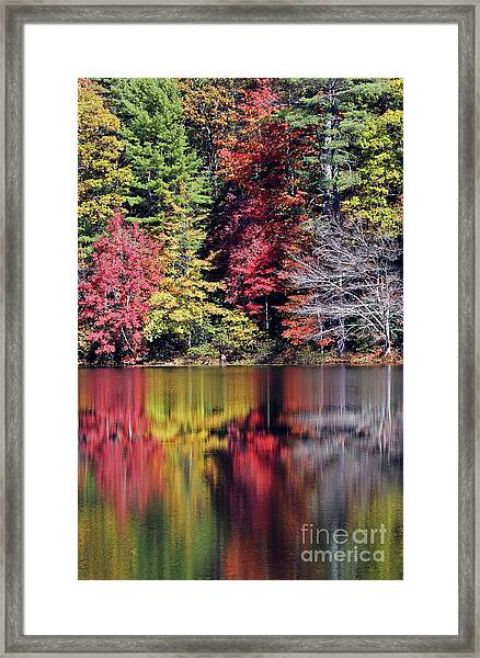 Reflections Of A Bare Tree Framed Print