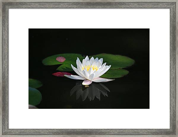 Reflections Of A Water Lily Framed Print