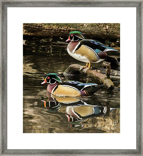 Reflections Of You And Me Wildlife Art By Kaylyn Franks Framed Print