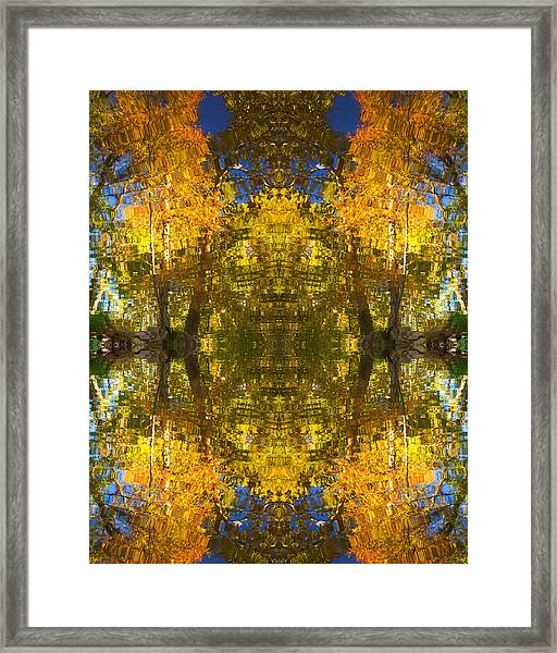 Reflections Trees And Water Framed Print