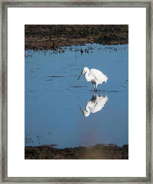 Reflections White Egret Framed Print