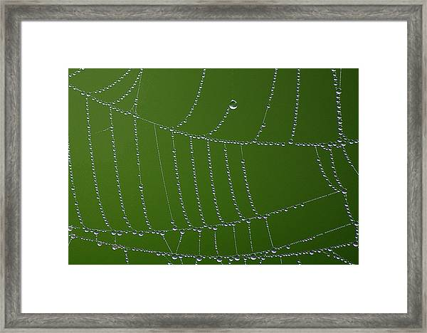 Refracted Pasture Web Framed Print