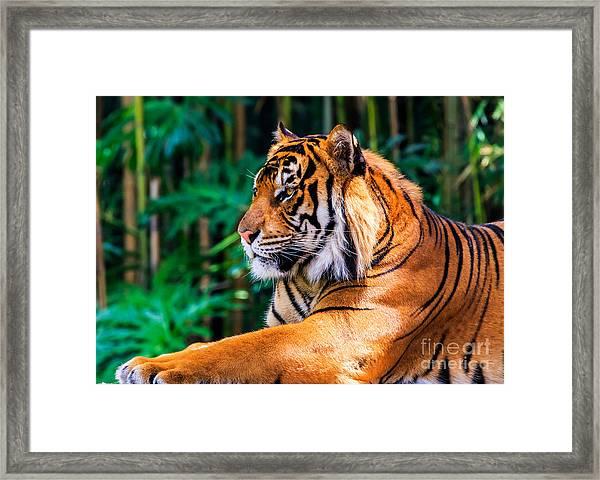 Regal Tiger Framed Print