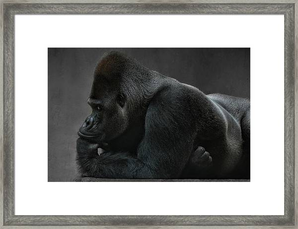 Relaxed Silverback Framed Print