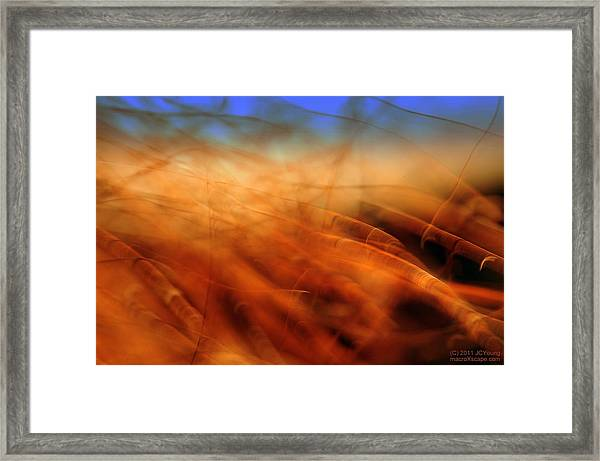 Remnants Of Fall Framed Print by JCYoung MacroXscape