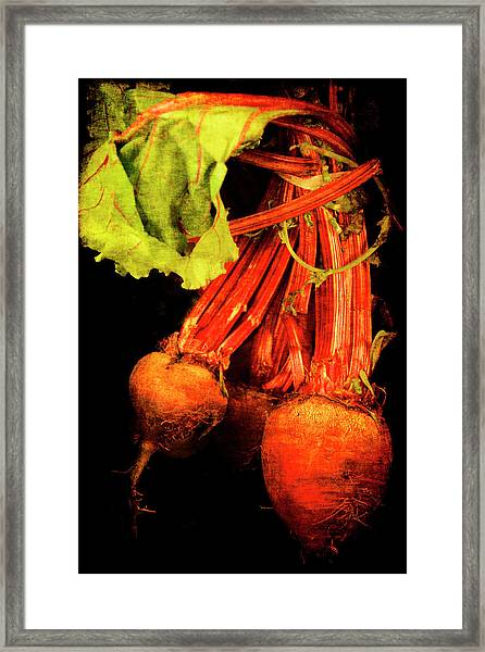 Renaissance Beetroot Framed Print