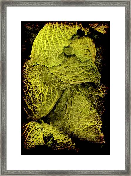 Renaissance Chinese Cabbage Framed Print