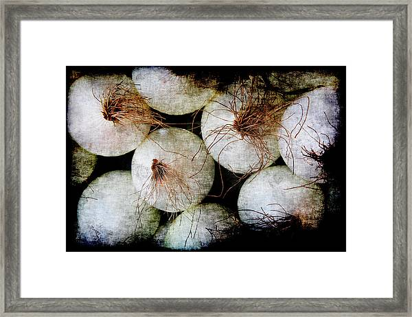 Renaissance White Onions Framed Print