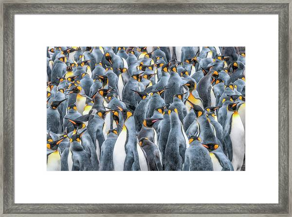 Republicans Discussing Climate Change. Framed Print
