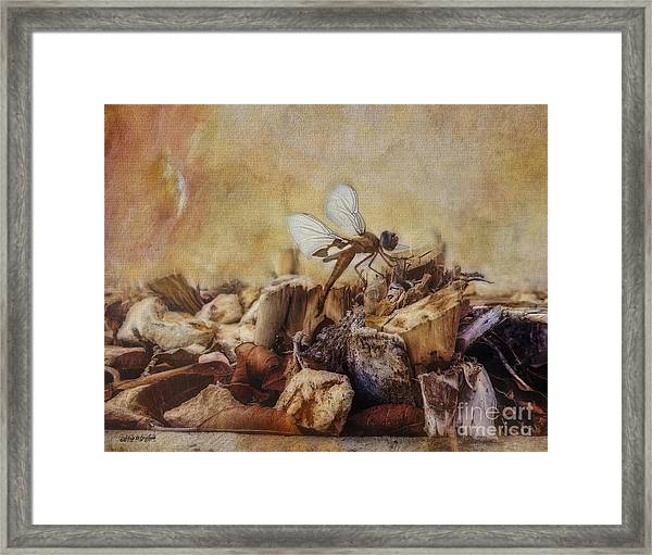 Respite Of The Mosquito Hawk Framed Print