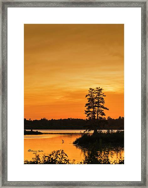 Restful Night Framed Print