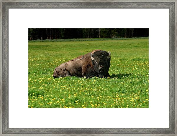 Resting In Wildflowers Framed Print