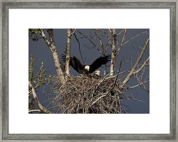 Returning Home To The Nest Framed Print