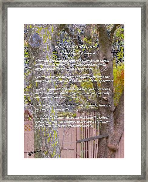 Reverence Of Trees Framed Print