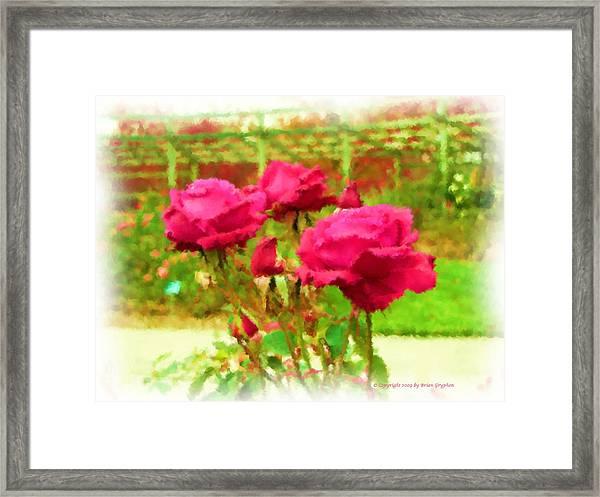 r.'Forgotten Dreams' Framed Print