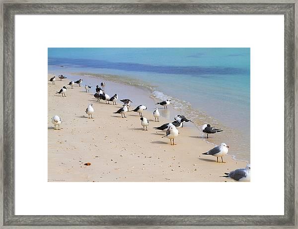 Rhapsody In Seabird Framed Print