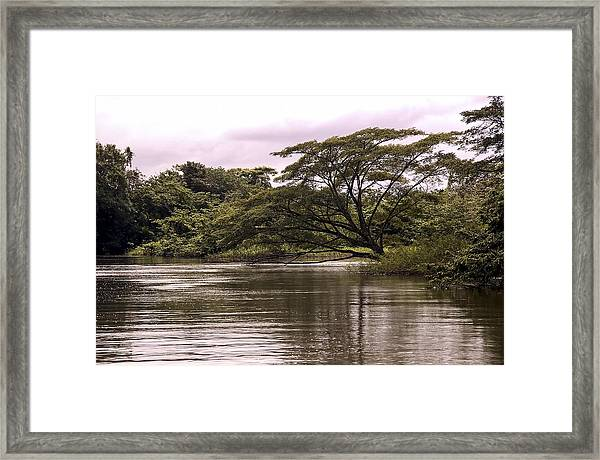 Riparian Rainforest Canopy Framed Print