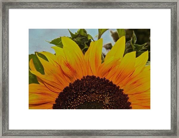 Rising Sun Framed Print by Odd Jeppesen