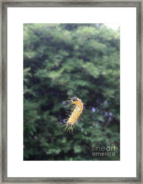 Rising To Rebirth Framed Print