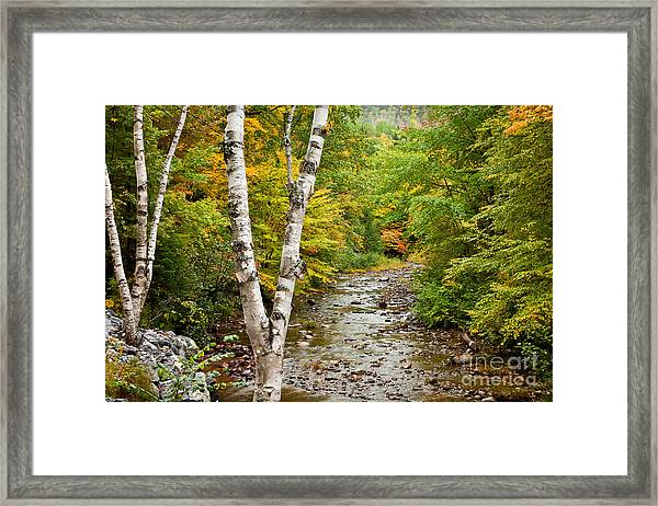 Framed Print featuring the photograph River Birch by Susan Cole Kelly