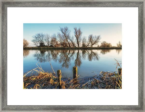 Riverside Trees Framed Print
