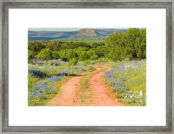 Road To Bluebonnet Heaven - Willow City Loop Texas Hill Country Llano Fredericksburg Framed Print