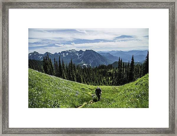 Roaming Above The Trees. Framed Print