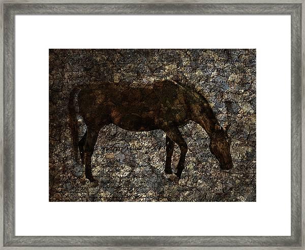 Roan Stallion Framed Print