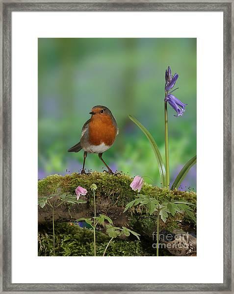 Robin In Spring Wood Framed Print