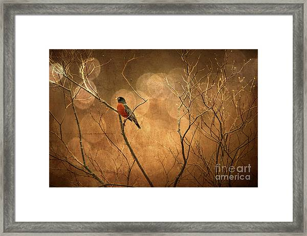 Framed Print featuring the photograph Robin by Lois Bryan