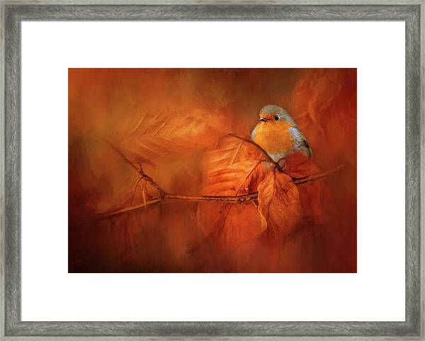 Robin Red Breast In Autumn Framed Print