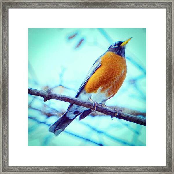 Robin Red Breast In Winter - Impressionism Framed Print