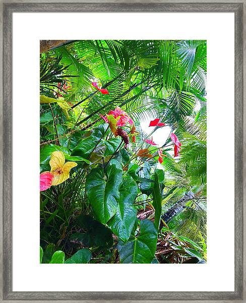 Robins Garden With Anthuriums And Ferns Framed Print
