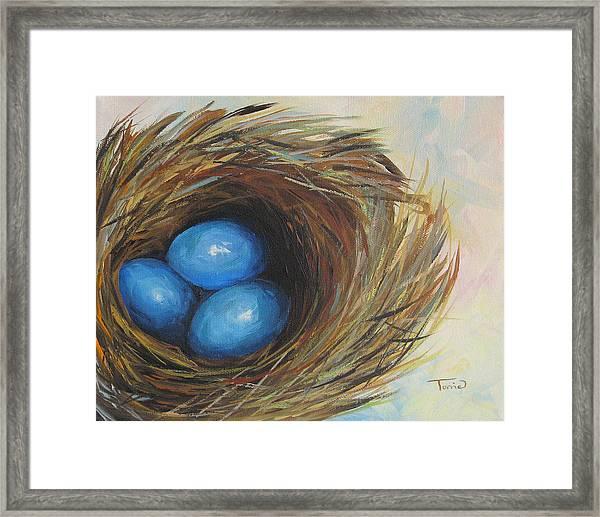 Robin's Three Eggs Framed Print by Torrie Smiley