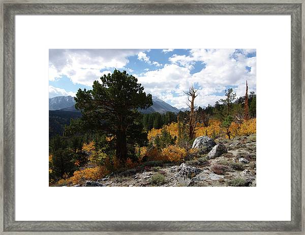 Rock Creek Shrub Aspens Eastern Sierra Framed Print