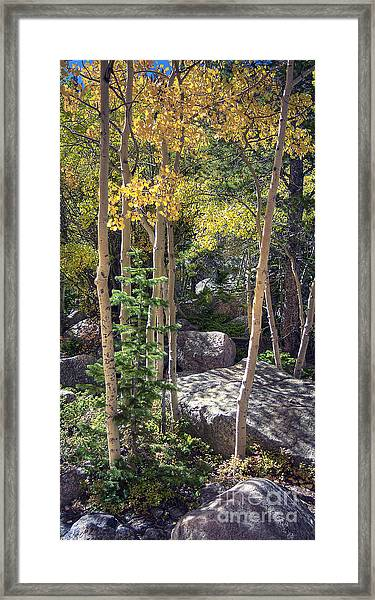 Rock Garden 2 Framed Print