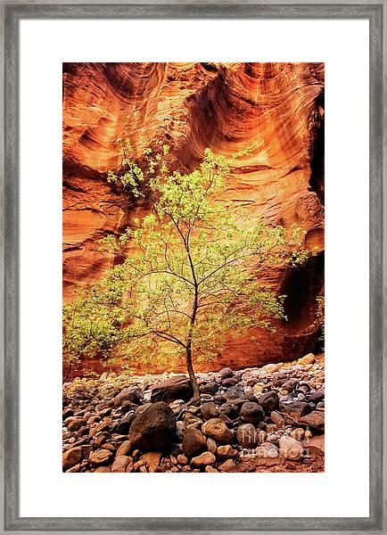 Rock Tree Framed Print